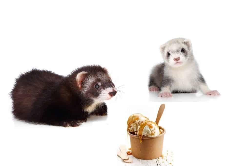 Can Ferrets Eat Ice Cream