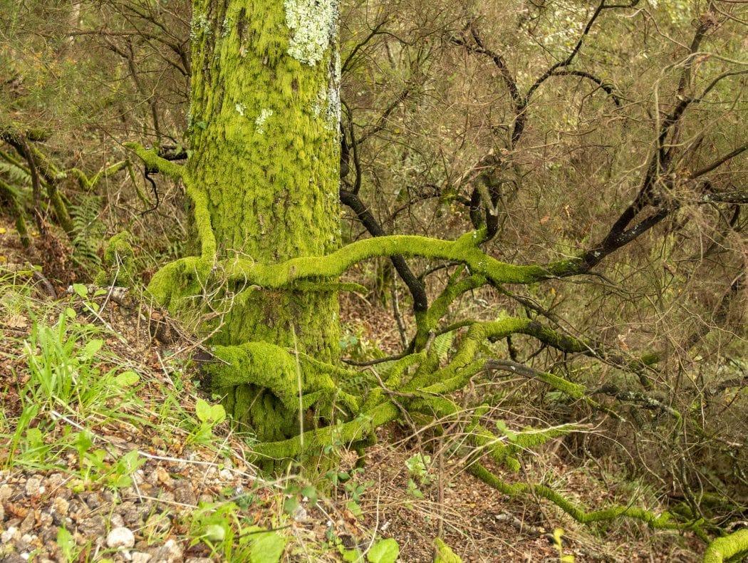 Biodiversidade no Vale do Lourêdo em Ribeira de Pena na Serra do Alvão