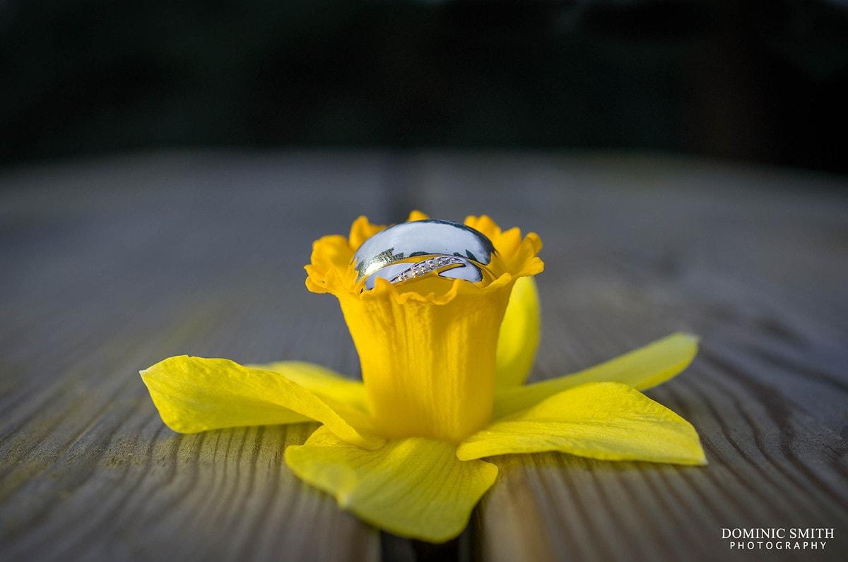Wedding Rings on a Daffodil