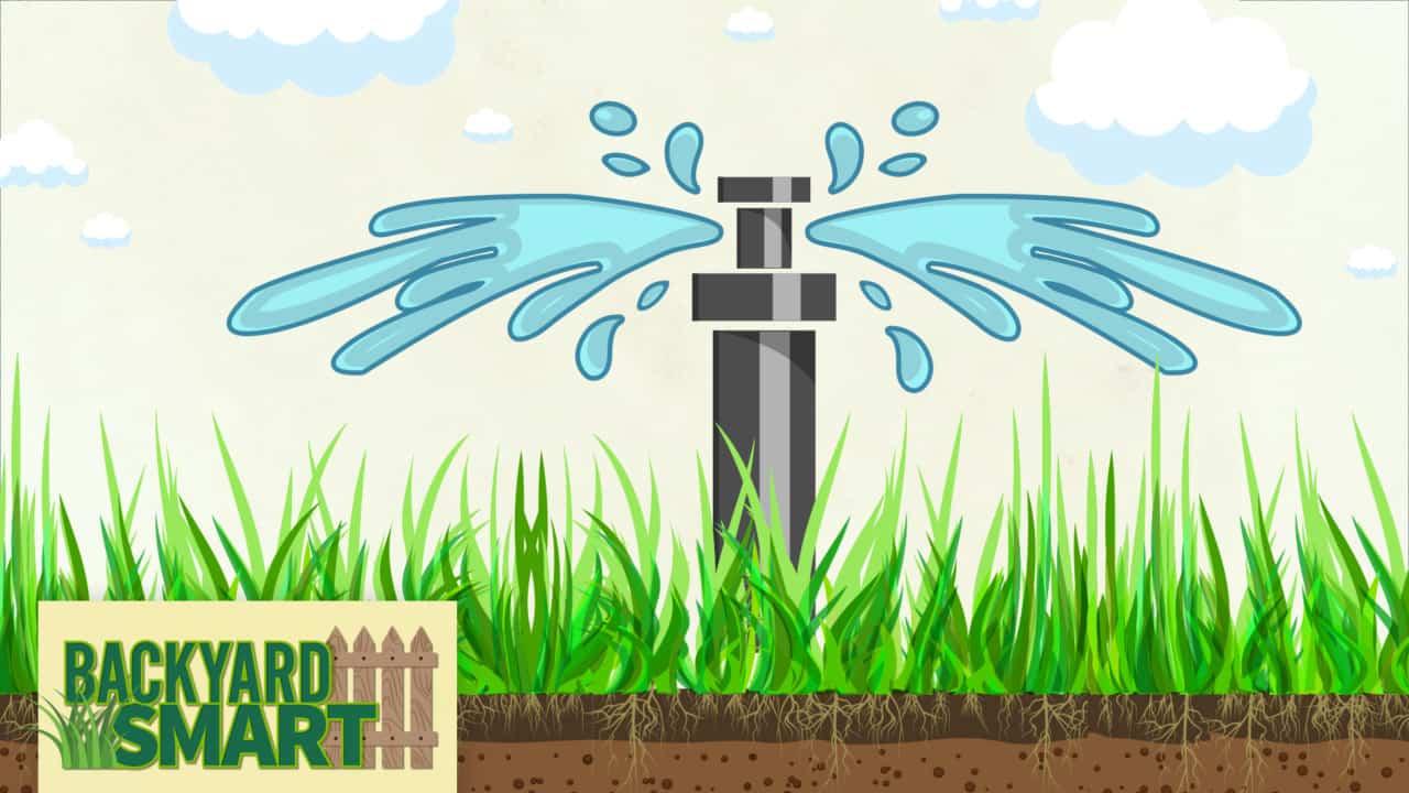 Backyard Smart Lawn Watering Tips