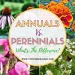 What's the Difference Between Annual and Perennial Flowers?