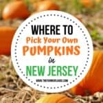 Find Your Perfect Pumpkin At One Of These New Jersey Pumpkin Patches