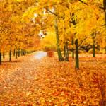 October News
