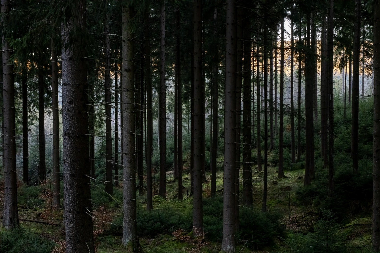 Nadelwald direkt oberhalb vom Campingplatz Meyersgrund im Thüringer Wald