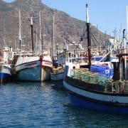 Fishing boats in Hout Bay