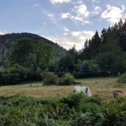 Idylle im Thüringer Wald