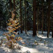 Herbstfarben und Schnee im Thüringer Wald