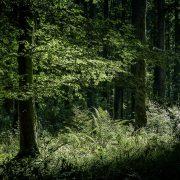 Lichtflecken im Wald