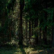 Gegenlichtaufnahme tief im Thüringer Wald