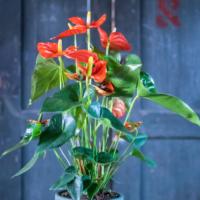 Amazone Plants (7)