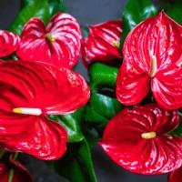 Amazone Plants (9)
