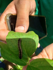 Brazilian company FarmBox offers a pest and disease monitoring tool, that allows growers to control pests in a very targeted way. - Photo: Farmbox