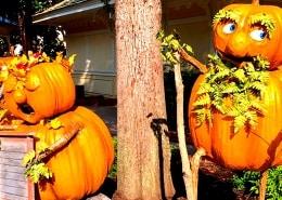 Dollywood Harvest Festival en LumiNights