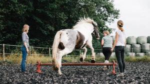 Pferd springt hinter einer Seminarteilnehmerin über ein Hindernis