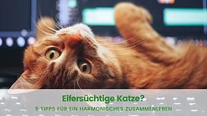 Eifersüchtige Katze: 5 Tipps für ein harmonisches Zusammenleben