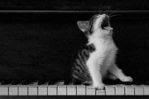 singing voice guitar piano music lessons toronto