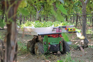 Today Burro has 90 robots in table grape fields covering 100-300 miles a day autonomously, six days a week. - Photo: Burro