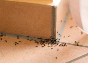Ants in bathroom