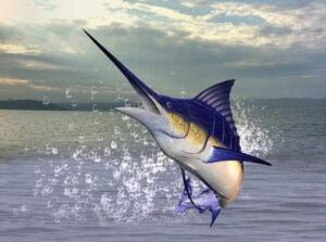 Top 11 Fighting Fish – Fishing & Hunting