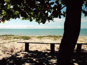 Foto einer Bank unter einem Baum am Strand mit türkisem Wasser
