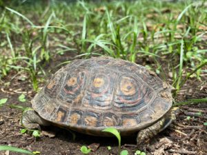 Read more about the article World turtle day