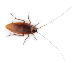 Roach example