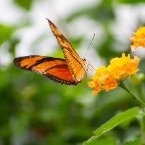 Motýl Schmetterlinghaus