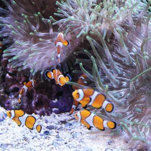Akváriu v Loro Parque