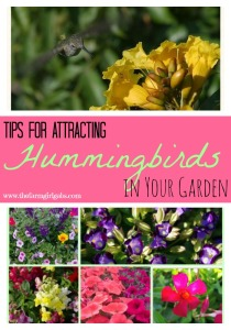 Tips for Attracting Hummingbirds in You rGarden from How Does Your Garden Grow? ~ www.thefarmgirlgabs.com