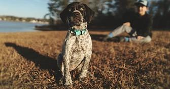 dog with bark collar