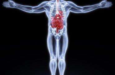 asse intestino-cervello