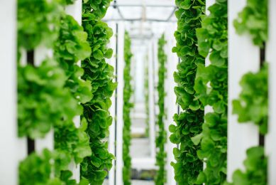 Bayer and Temasek start vertical farming company
