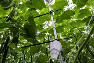 Sensors being used in cucumber cultivation. - Photo: Roel Dijkstra