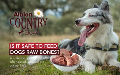Is It Safe To Feed Dogs Raw Bones?