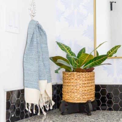 Bathroom Plant Post 2