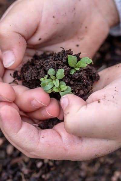 start plants from seeds - small plant in soil