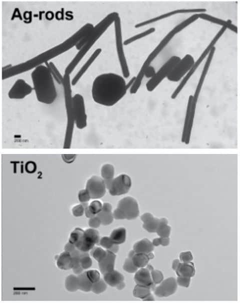 Nanotoxicity Screening