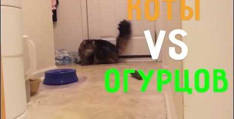 Коты vs Огурцов   Приколы с котами