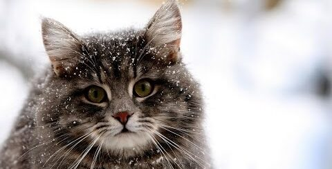 funny cats/Приколы котейки #2 2016