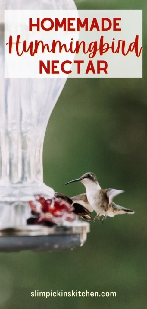 Hummingbird nectar recipe pinterest image
