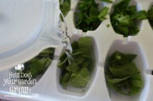 Freezing Herbs in Water