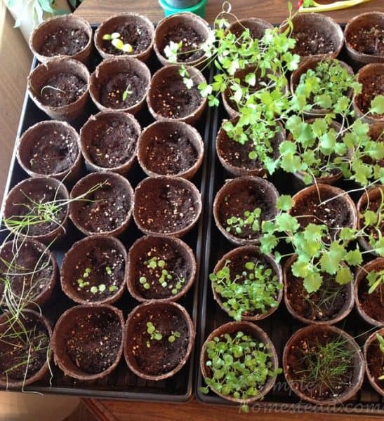 save money by starting seeds in peat moss trays