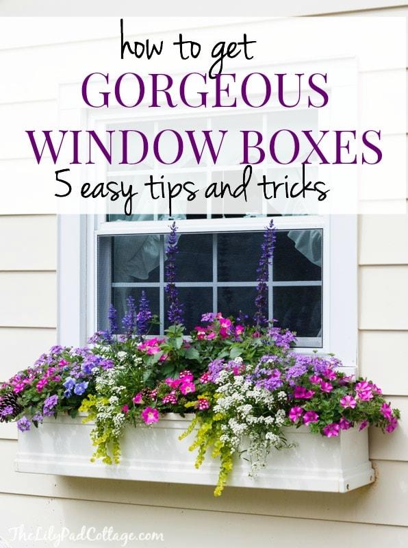 window box tips