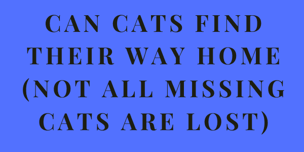 Can Cats Find Their Way Home