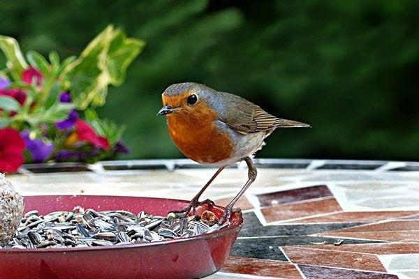 bird feeder that attracts wild birds
