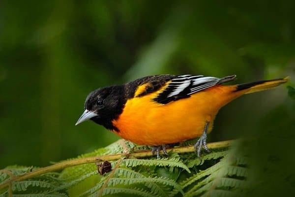 Birding In Maryland