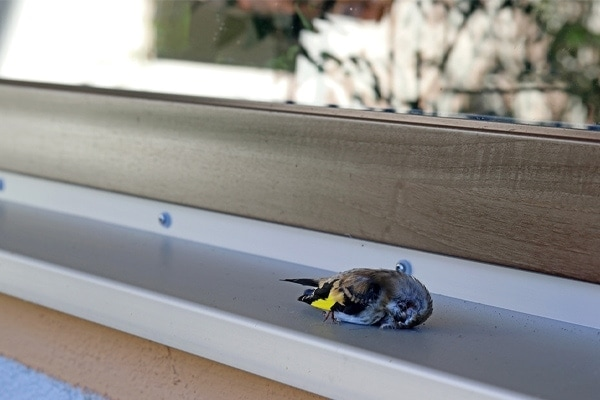 bird flew into window