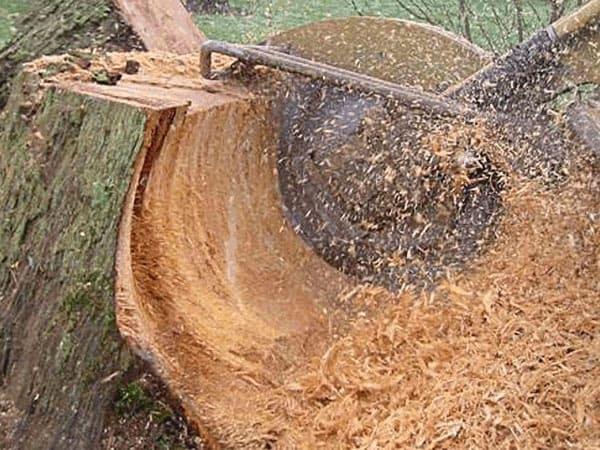 stump grinding Oklahoma City - OKC Stump Removal Company