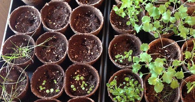ASimpleHomestead.com - seeds started