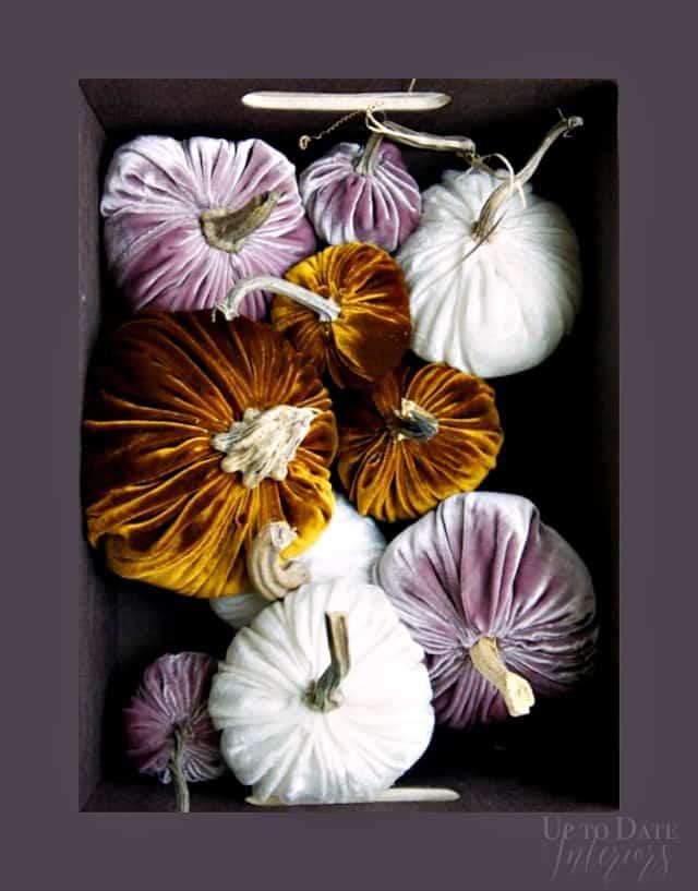 velvet-pumpkins-box-640